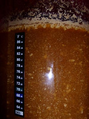 a close up of the yeast in the beer